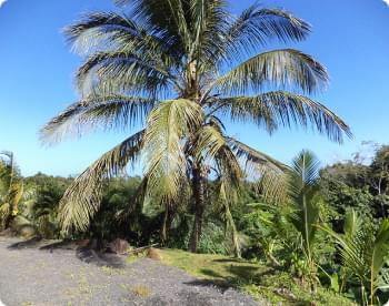 palmier dans le jardin