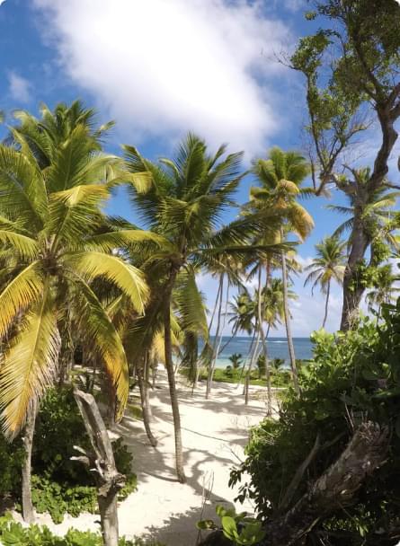 palmiers sur la plage avec vue sur la mer