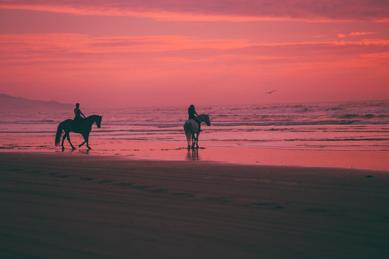 deux chevaux sur la plage en guadeloupe