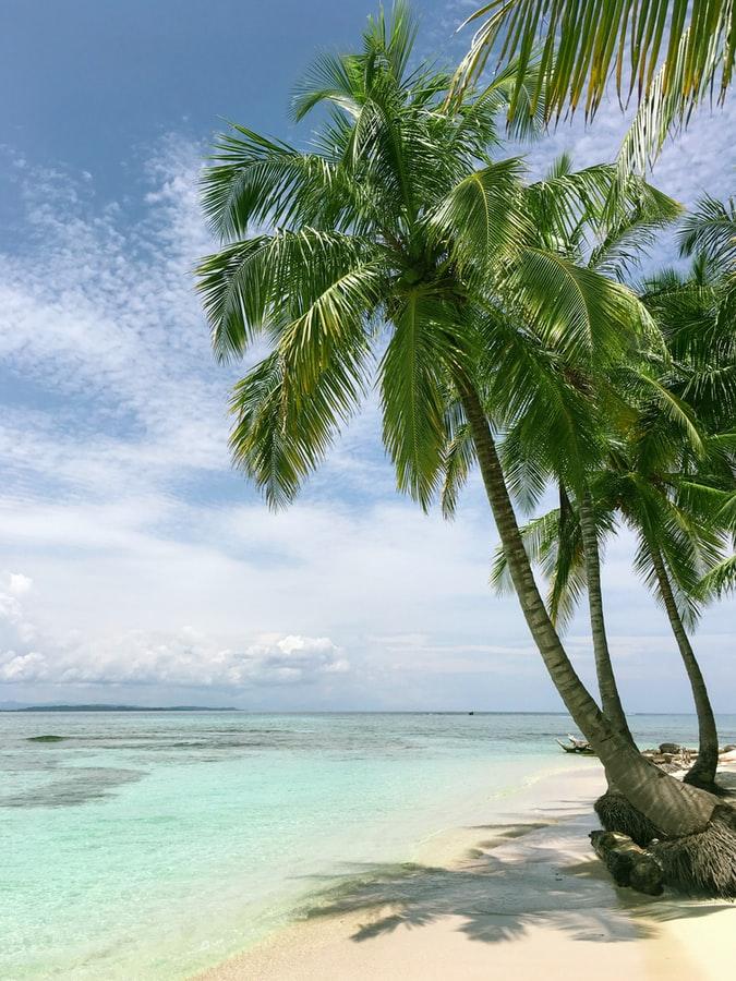 plage guadeloupéenne avec des palmiers au soleil