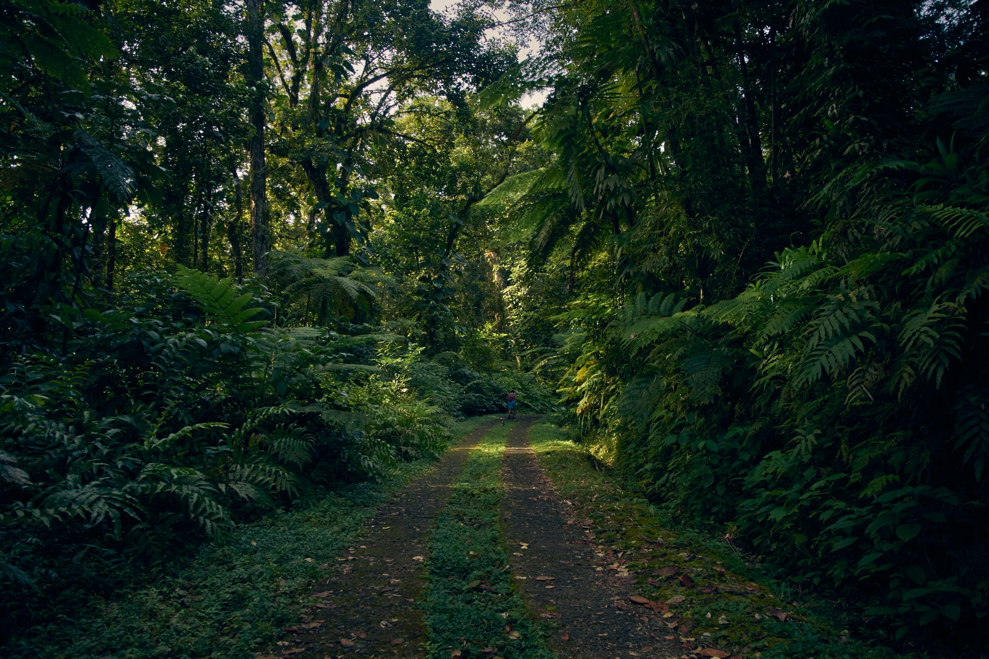 trace de route pour quad dans la forêt en guadeloupe